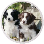 Border Collie Dog, Two Puppies Round Beach Towel