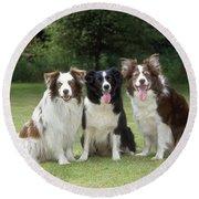 Border Collie Dogs Round Beach Towel
