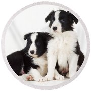 Border Collie Dogs, Two Puppies Round Beach Towel