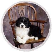 Border Collie Puppy On Chair Round Beach Towel