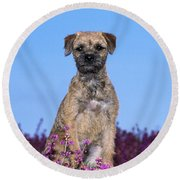 Border Terrier Dog, In Heather Round Beach Towel