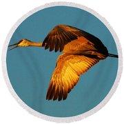 Bosque Del Apache Sandhill Crane Golden Light Round Beach Towel