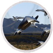 Bosque Del Apache Snow Geese In Flight Round Beach Towel by Bob Christopher