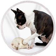 Boston Terrier & Mink Rat Round Beach Towel