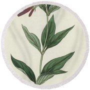 Botanical Engraving Round Beach Towel