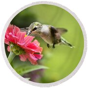 Botanical Hummingbird Round Beach Towel