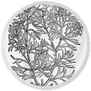 Botany: African Rue, 1597 Round Beach Towel