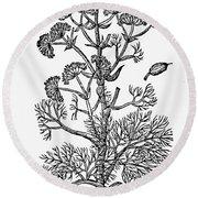 Botany: Giant Fennel, 1597 Round Beach Towel