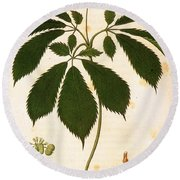 Botany: Ginseng Round Beach Towel