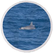 Bottlenose Dolphin Round Beach Towel