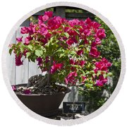 Bougainvillea Bonsai Tree Round Beach Towel