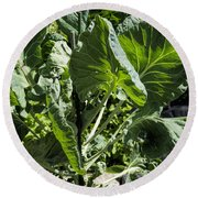 Bountiful Brussel Sprouts Round Beach Towel