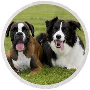 Boxer And Border Collie Round Beach Towel