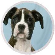 Boxer Dog, Close-up Of Head Round Beach Towel by John Daniels