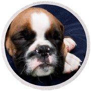 Boxer Puppy Sleeping Round Beach Towel by Weston Westmoreland