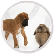 Boxer Puppy With Lionhead-lop Rabbit Round Beach Towel by Mark Taylor