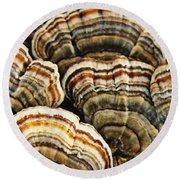 Bracket Fungus 1 Round Beach Towel
