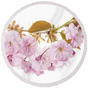 Branch With Cherry Blossoms Round Beach Towel