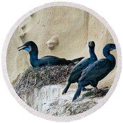 Brandts Cormorant Nesting On Cliff Round Beach Towel