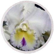 Brassocattleya Orchid 5292 Round Beach Towel