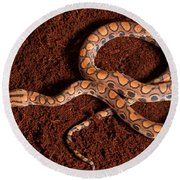 Brazilian Rainbow Boa Round Beach Towel