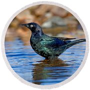 Brewers Blackbird In Water Round Beach Towel