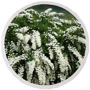 Bridal Wreath Spirea - White Flowers - Florist Round Beach Towel