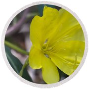 Bridges Evening Primrose Round Beach Towel