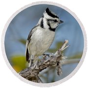 Bridled Titmouse Round Beach Towel