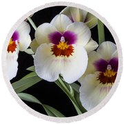 Bright Miltonia Orchids Round Beach Towel