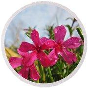 Bright Phlox Blooms Round Beach Towel