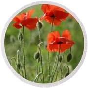 Bright Poppies 1 Round Beach Towel