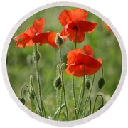 Bright Poppies 2 Round Beach Towel