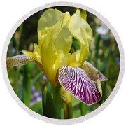 Bright Yellow Purple Iris Flower Irises Round Beach Towel
