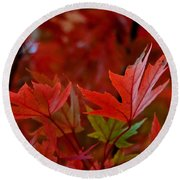 Brilliant Red Maples Round Beach Towel by Linda Unger