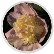Brilliant Spring Sunshine - A Showy Pink Peony From My Garden Round Beach Towel
