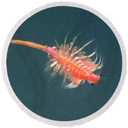 Brine Shrimp Round Beach Towel