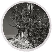 Bristlecone And Wildflowers In Black And White Round Beach Towel