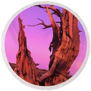 Bristlecone Pine At Sunset White Mountains Californa Round Beach Towel