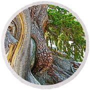 Bristlecone Pine On Ramparts Trail In Cedar Breaks National Monument-utah  Round Beach Towel