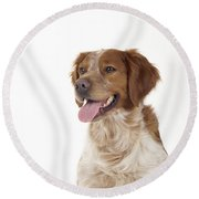 Brittany Dog, Close-up Of Head Round Beach Towel