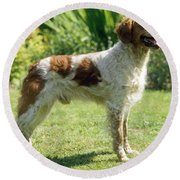 Brittany Dog, Standing Side Round Beach Towel