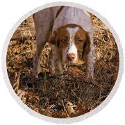 Brittany Spaniel Pixel's Pointed Woodcock Round Beach Towel