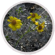 Brittlebush Flowers Round Beach Towel