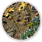 Brittlebush On Borrego Palm Canyon Trail In Anza-borrego Desert Sp-ca Round Beach Towel