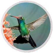 Broad-billed Hummingbird At Ocotillo Round Beach Towel