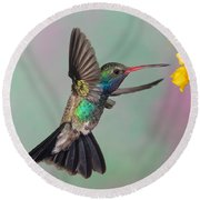 Broad-billed Hummingbird Round Beach Towel by Jim Zipp