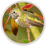 Broad Tailed Hummingbird Round Beach Towel