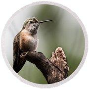 Broad-tailed Hummingbird Sit  Round Beach Towel