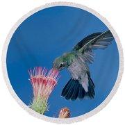 Broadbill Hummingbird Feeding At Flower Round Beach Towel